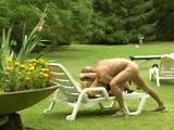 Pichačka v parku, pridáte sa ? - freevideo